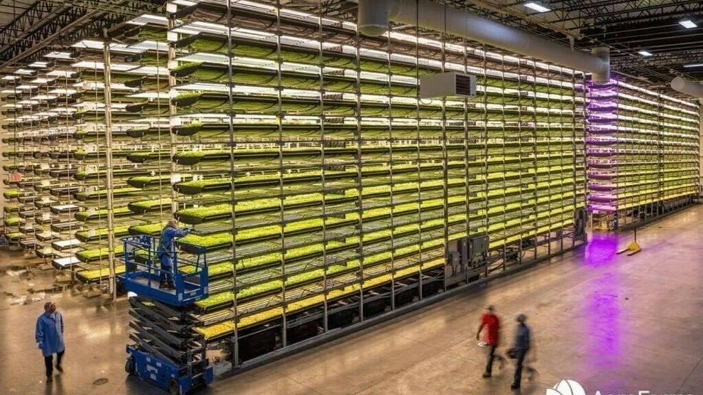 Producción de arándanos en granjas verticales por AeroFarms & Hortifrut