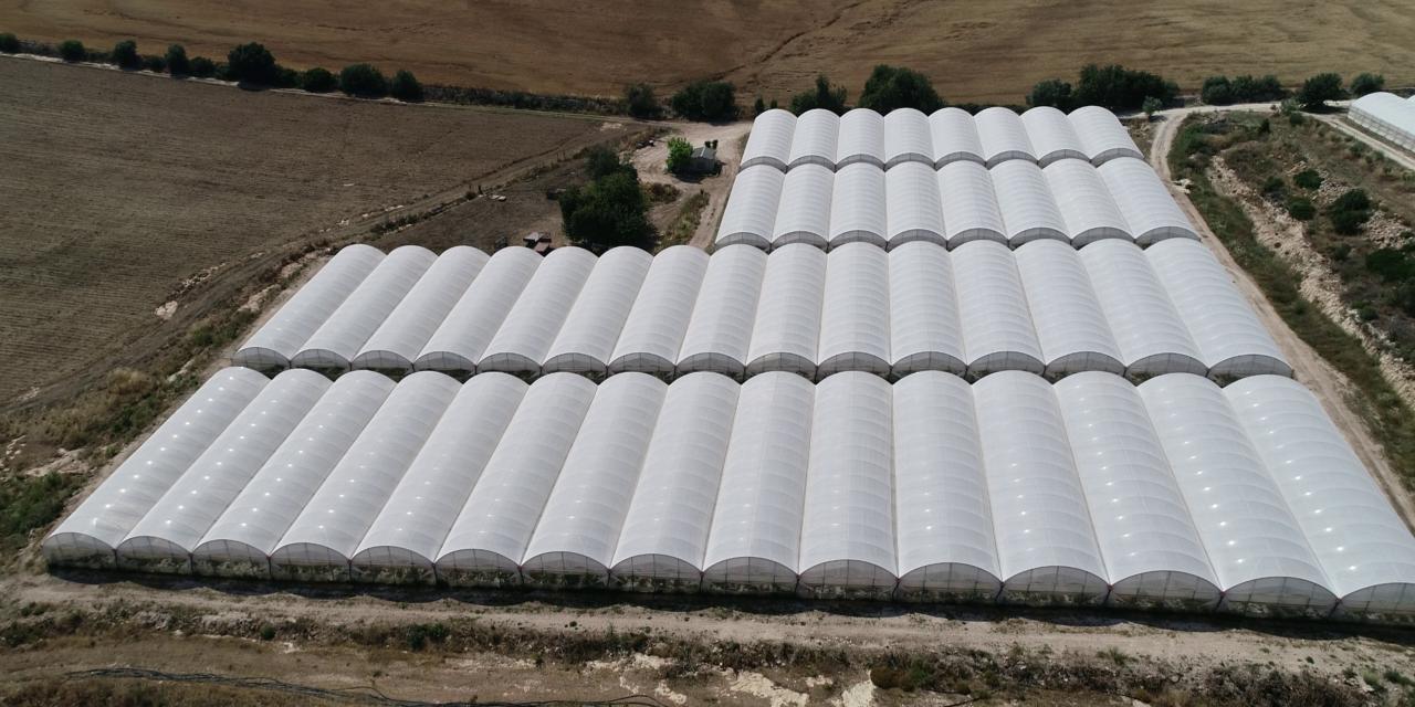 Protección de cultivos: conoce el escudo termorreflectante de Arrigoni que mejora el rendimiento