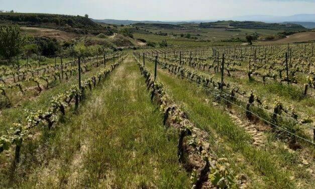 El uso de cubiertas vegetales para contrarrestar la erosión en viñedos