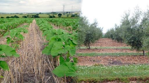 Actualidad de la agricultura española en técnicas conservacionistas y siembra directa