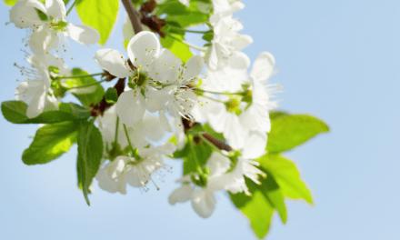 Asegura la mejor floración y cuajado de frutos con Promofruit BZ de Agriges