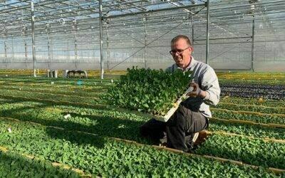 Europa: la temporada de coles ya está en marcha