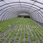Buenas perspectivas para el manejo de residuos plásticos agrarios