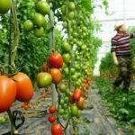 Fertilización y genética, dos palabras que llevan a la rentabilidad