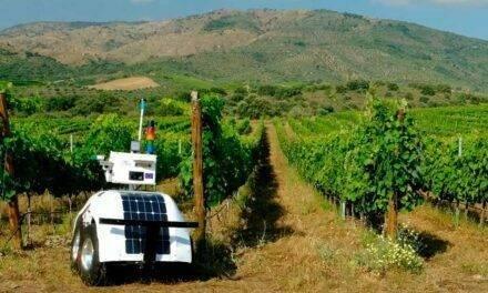 Diseñan un robot autónomo para el cultivo de vid