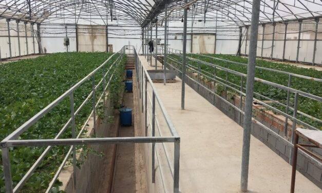 Contaminación y extremos climáticos, objetivos del Grupo de Horticultura del IMIDA
