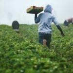 La agricultura en la UE necesita condicionalidad social