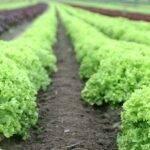 Una alternativa para combatir el cansancio de los suelos
