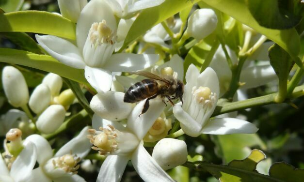 La supervivencia de las abejas en constante amenaza