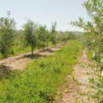 Sostenibilidad y rentabilidad, fáciles de alcanzar con una agricultura de conservación