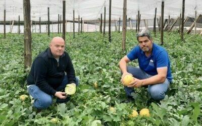 Grazalema, el nuevo melón galia de Semillas Fitó