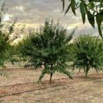 Agricultura y energía fotovoltaica, la simbiosis perfecta