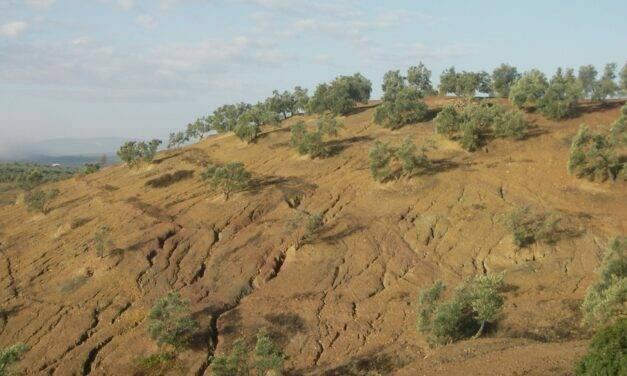 Control de cárcavas en zonas agrícolas del sur de España