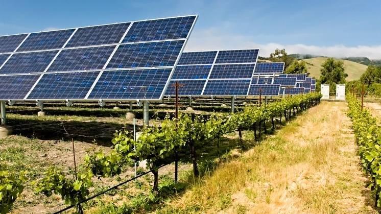 Agrivoltaica, una solución de compromiso