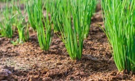 Agricultura de Conservación: excelente oportunidad para afrontar los retos presentes y futuros de la agricultura