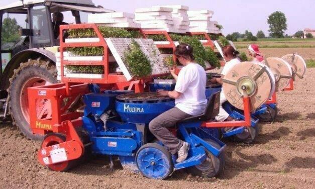 Multipla, la trasplantadora para una gran variedad de cultivos hortícolas