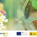 Bioentonomy, el proyecto para obtener insumos agrícolas a base de insectos