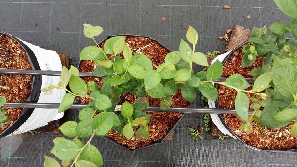 Conoce los 3 aspectos clave en un cultivo hidropónico
