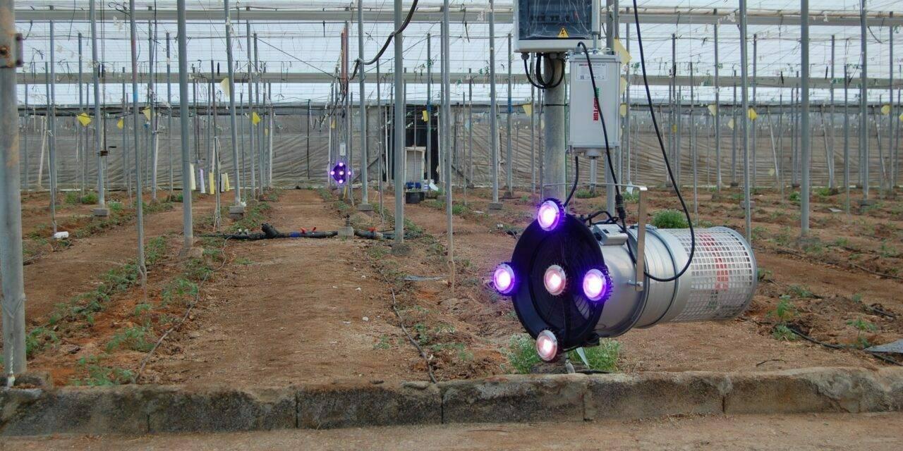 Biocaptur S50, la solución para el control de Tuta absoluta en invernaderos