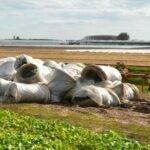 MAPLA gestionará los residuos plásticos de uso agrario