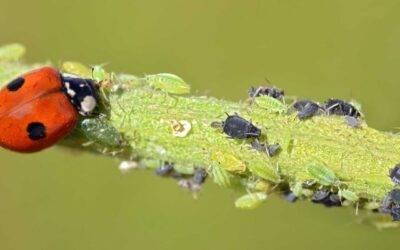 Control de plagas en cultivos hortícolas: en camino hacia la sostenibilidad
