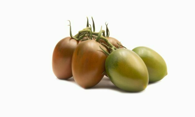 TOMACHOC®, la gama de tomates chocolate de Top Seeds International