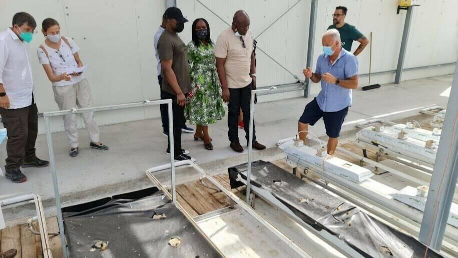 Tecnologías hortícolas novedosas para empresarios de Nigeria