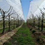 AGRICOVER: la cobertura más adecuada para cerezos