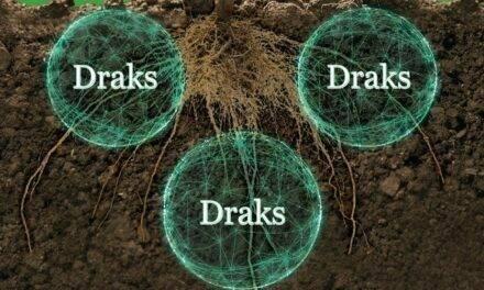 Draks, la nueva formulación microbiana de Agriges para unas raíces sanas y robustas