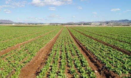 Los ácidos húmicos en la agricultura