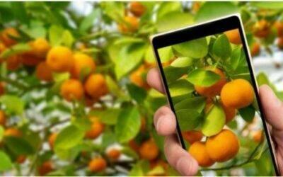 La transformación digital del medio agrícola