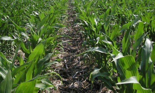 La Agricultura de Conservación como respuesta del sector agrícola ante una situación de emergencia climática