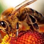 Colmenas inteligentes para una horticultura más sustentable y eficiente