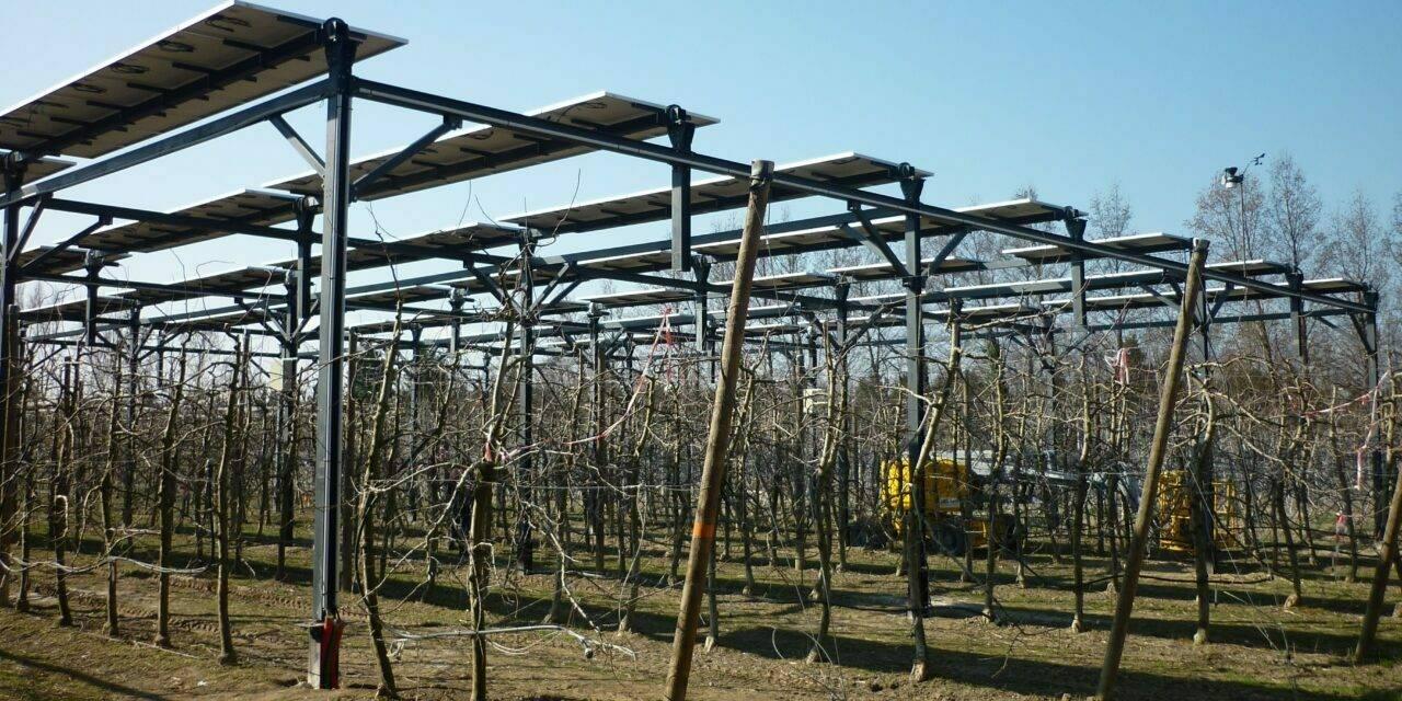 Producción de manzanas y de energía solar, un experimento agrivoltaico