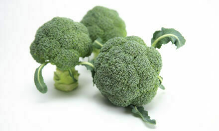 Sakata presenta Ulysses, la nueva variedad de brócoli