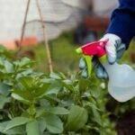 El jabón potásico, un aliado natural para la lucha contra las plagas