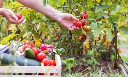 Murcia se prepara para el 1º Congreso de Agricultura Ecológica