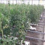 Sistemas sostenibles para el control de clima bajo invernadero