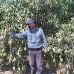 Las nuevas tecnologías y la gestión eficiente del agua y fertilización, claves para hacer más competitiva la industria del mango