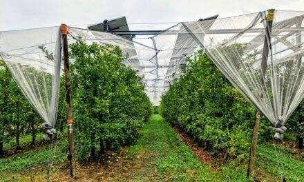 ¿Es posible obtener electricidad sin competir con la superficie agrícola? El Agrivoltaismo