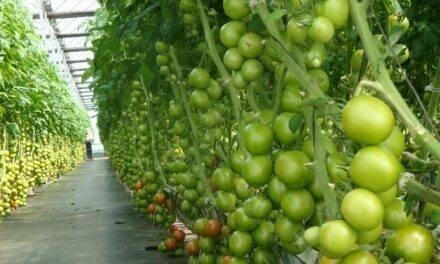 Inicia el proyecto VIRTIGATION, para buscar soluciones a enfermedades víricas en tomates y cucurbitáceas