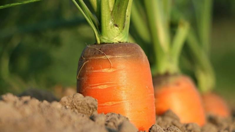 Impulsando las cosechas con la mirada en el futuro