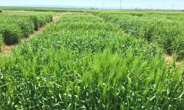 """El """"Informe Noleppa"""" advierte que sin la mejora vegetal será imposible alcanzar el Pacto Verde Europeo"""