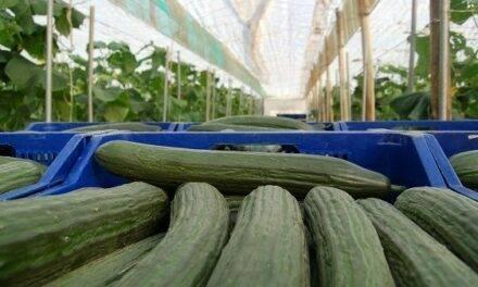 Cutesolar: El sector de los invernaderos solares se cita en Fruit Attraction