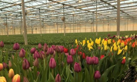 Países Bajos, a la vanguardia de la floricultura