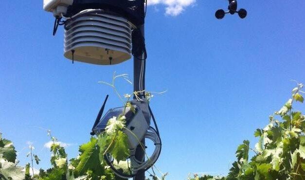 Proyecto Viticast, predicción de enfermedades fúngicas en viñedos