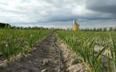 Agricultura sostenible: optimizar el uso del agua en las explotaciones de regadío