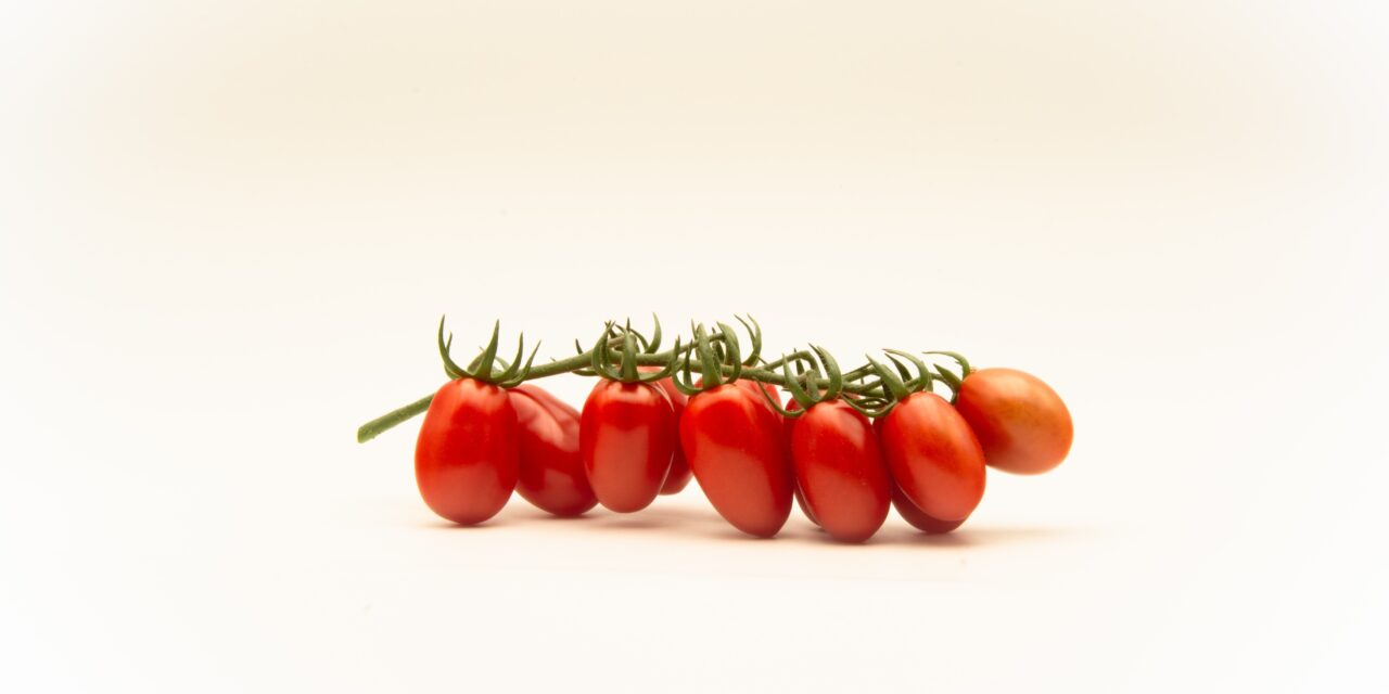 Top Seeds International launches Fanello, its first mini-plum tomato