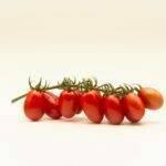 Top Seeds International lanza el Fanello, su primer tomate mini-plum