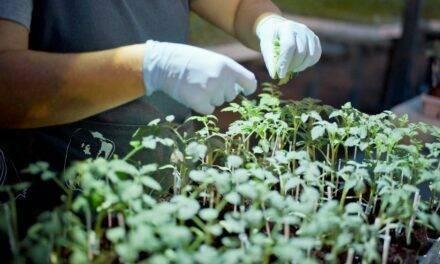 Planta a la carta, desde el semillero